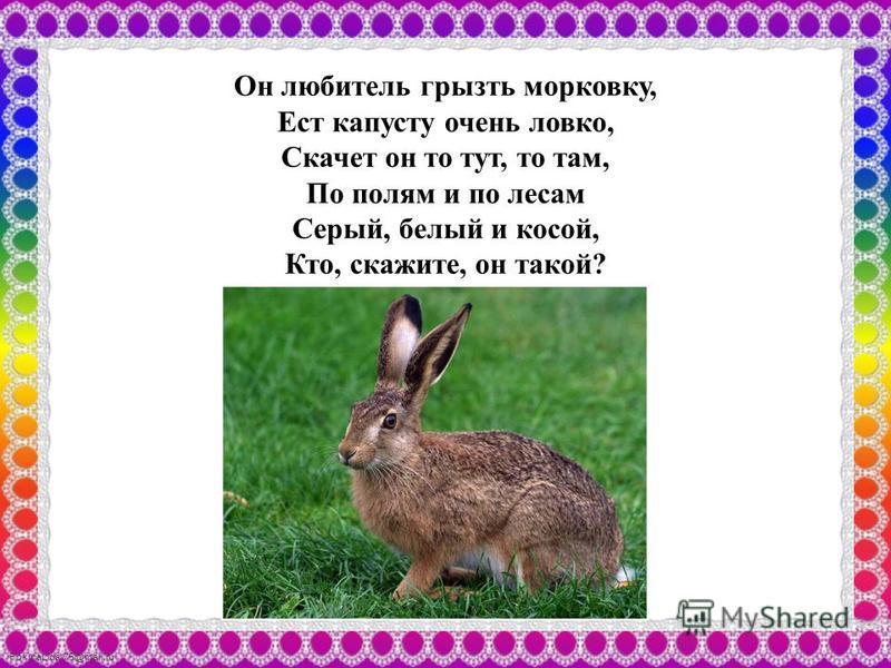 FokinaLida.75@mail.ru Он любитель грызть морковку, Ест капусту очень ловко, Скачет он то тут, то там, По полям и по лесам Серый, белый и косой, Кто, скажите, он такой?