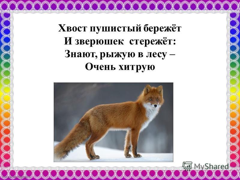 FokinaLida.75@mail.ru Хвост пушистый бережёт И зверюшек стережёт: Знают, рыжую в лесу – Очень хитрую