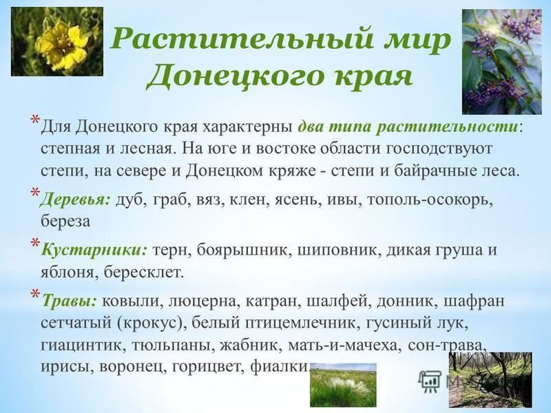 Растительный мир Донецкого края * Для Донецкого края характерны два типа растительности: степная и лесная. На юге и востоке области господствуют степи, на севере и Донецком кряже - степи и байрачные леса. * Деревья: дуб, граб, вяз, клен, ясень, ивы,