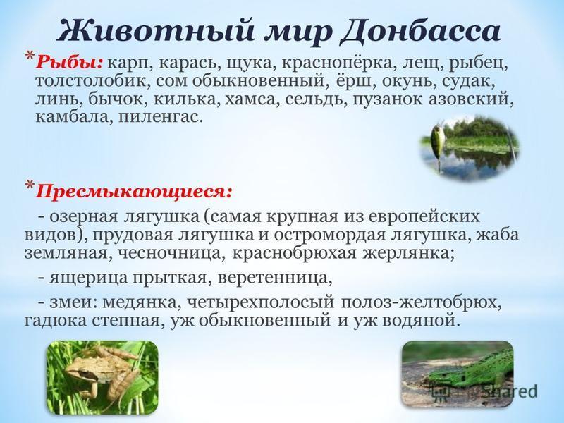 Животный мир Донбасса * Рыбы: карп, карась, щука, краснопёрка, лещ, рыбец, толстолобик, сом обыкновенный, ёрш, окунь, судак, линь, бычок, килька, хамса, сельдь, пузанок азовский, камбала, пиленгас. * Пресмыкающиеся: - озерная лягушка (самая крупная и