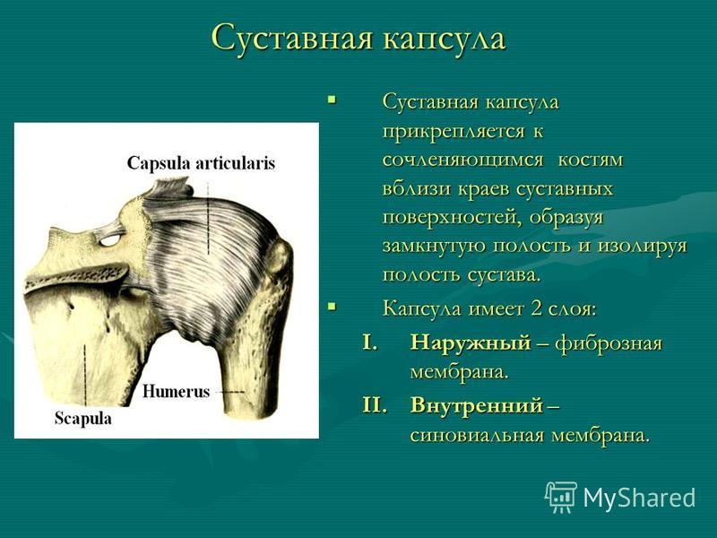 Суставная капсула Суставная капсула прикрепляется к сочленяющимся костям вблизи краев суставных поверхностей, образуя замкнутую полость и изолируя полость сустава. Капсула имеет 2 слоя: I.Наружный – фиброзная мембрана. II.Внутренний – синовиальная ме