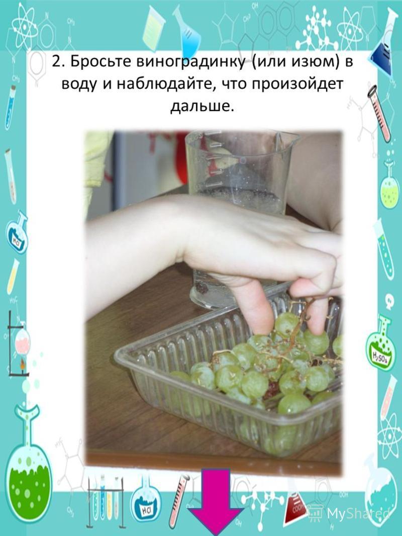2. Бросьте виноградинку (или изюм) в воду и наблюдайте, что произойдет дальше.