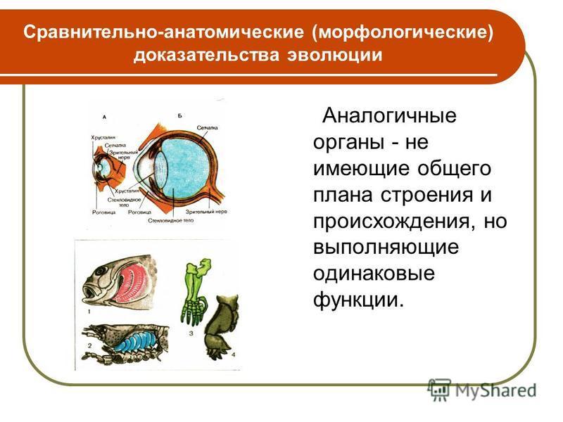 Аналогичные органы - не имеющие общего плана строения и происхождения, но выполняющие одинаковые функции.