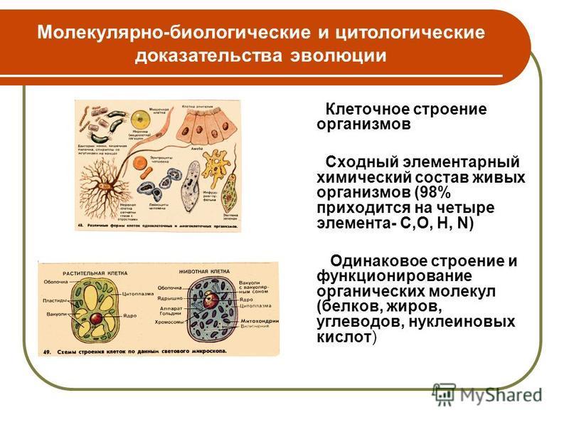 Молекулярно-биологические и цитологические доказательства эволюции Клеточное строение организмов Сходный элементарный химический состав живых организмов (98% приходится на четыре элемента- С,О, H, N) Одинаковое строение и функционирование органически