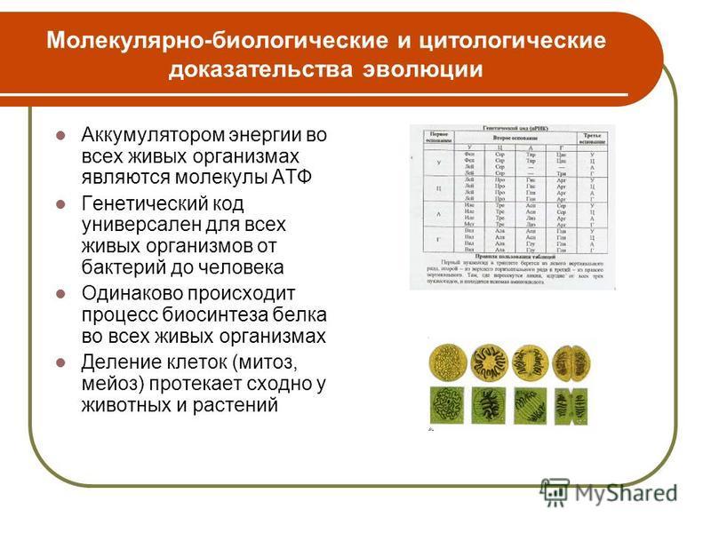 Молекулярно-биологические и цитологические доказательства эволюции Аккумулятором энергии во всех живых организмах являются молекулы АТФ Генетический код универсален для всех живых организмов от бактерий до человека Одинаково происходит процесс биосин