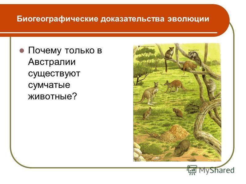 Биогеографические доказательства эволюции Почему только в Австралии существуют сумчатые животные?