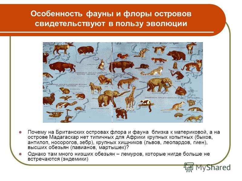 Особенность фауны и флоры островов свидетельствуют в пользу эволюции Почему на Британских островах флора и фауна близка к материковой, а на острове Мадагаскар нет типичных для Африки крупных копытных (быков, антилоп, носорогов, зебр), крупных хищнико