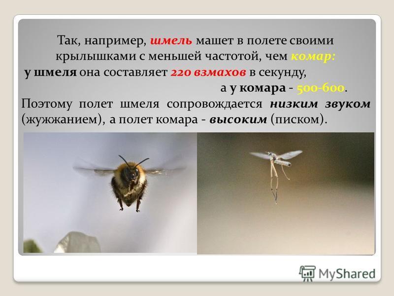 Так, например, шмель машет в полете своими крылышками с меньшей частотой, чем комар: у шмеля она составляет 220 взмахов в секунду, а у комара - 500-600. Поэтому полет шмеля сопровождается низким звуком (жужжанием), а полет комара - высоким (писком).