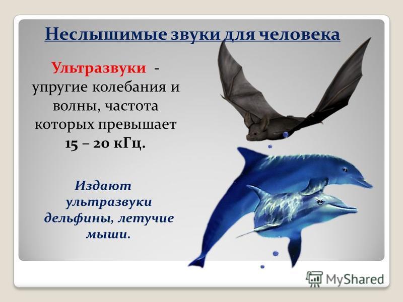 Неслышимые звуки для человека Издают ультразвуки дельфины, летучие мыши. Ультразвуки - упругие колебания и волны, частота которых превышает 15 – 20 к Гц.