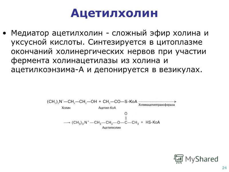 24 Ацетилхолин Медиатор ацетилхолин - сложный эфир холина и уксусной кислоты. Синтезируется в цитоплазме окончаний холинергических нервов при участии фермента холинацетилазы из холина и ацетилкоэнзима-А и депонируется в везикулах.