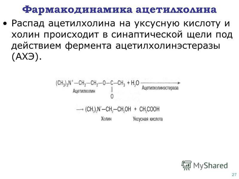27 Фармакодинамика ацетилхолина Распад ацетилхолина на уксусную кислоту и холин происходит в синаптической щели под действием фермента ацетилхолинэстеразы (АХЭ).