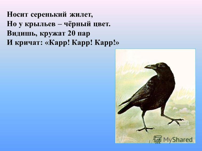 Носит серенький жилет, Но у крыльев – чёрный цвет. Видишь, кружат 20 пар И кричат: «Карр! Карр! Карр!»