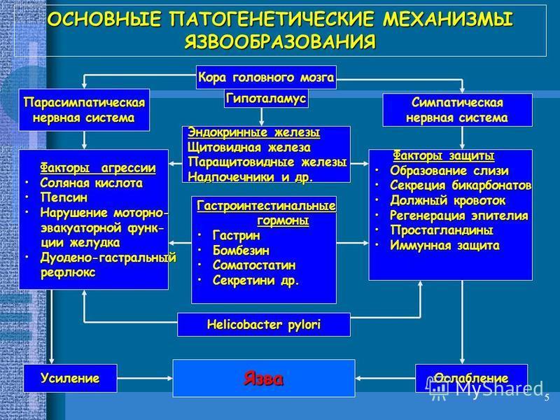 5 ОСНОВНЫЕ ПАТОГЕНЕТИЧЕСКИЕ МЕХАНИЗМЫ ЯЗВООБРАЗОВАНИЯ Кора головного мозга Гипоталамус Парасимпатическая нервная система Симпатическая нервная система Гастроинтестинальные гормоны гормоны Гастрин Гастрин Бомбезин Бомбезин Соматостатин Соматостатин Се