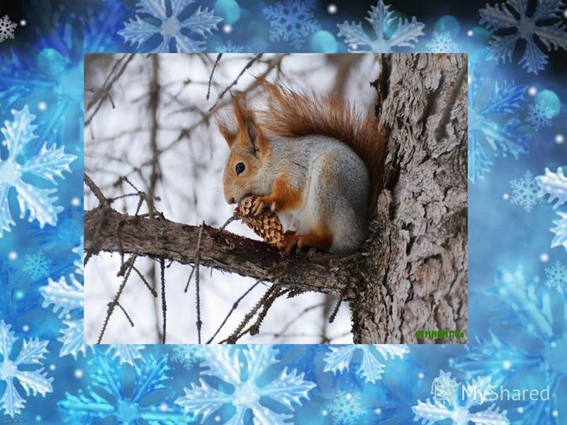 С ветки на ветку Могу я летать. Рыженький хвост Никому не поймать. Некогда летом В лесу мне играть - Надо грибы Для зимы собирать.