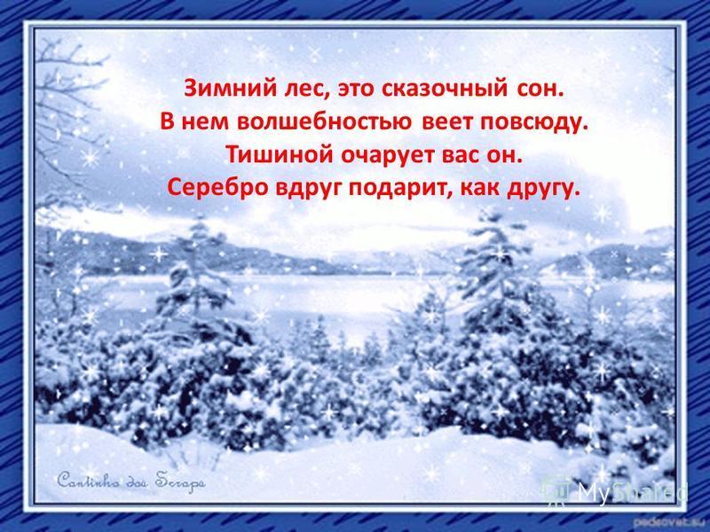 Зимний лес, это сказочный сон. В нем волшебностью веет повсюду. Тишиной очарует вас он. Серебро вдруг подарит, как другу.