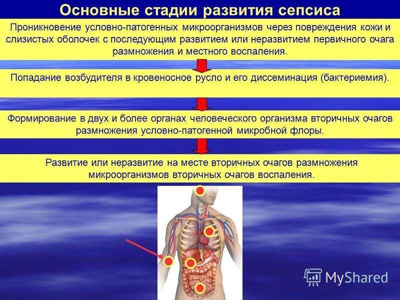 Основные стадии развития сепсиса Проникновение условно-патогенных микроорганизмов через повреждения кожи и слизистых оболочек с последующим развитием или не развитием первичного очага размножения и местного воспаления. Попадание возбудителя в кровено