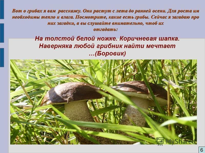 6 Вот о грибах я вам расскажу. Они растут с лета до ранней осени. Для роста им необходимы тепло и влага. Посмотрите, какие есть грибы. Сейчас я загадаю про них загадки, а вы слушайте внимательно, чтоб их отгадать: На толстой белой ножке. Коричневая ш
