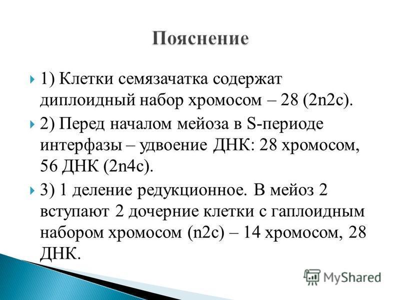 1) Клетки семязачатка содержат диплоидный набор хромосом – 28 (2n2c). 2) Перед началом мейоза в S-периоде интерфазы – удвоение ДНК: 28 хромосом, 56 ДНК (2n4c). 3) 1 деление редукционное. В мейоз 2 вступают 2 дочерние клетки с гаплоидным набором хромо