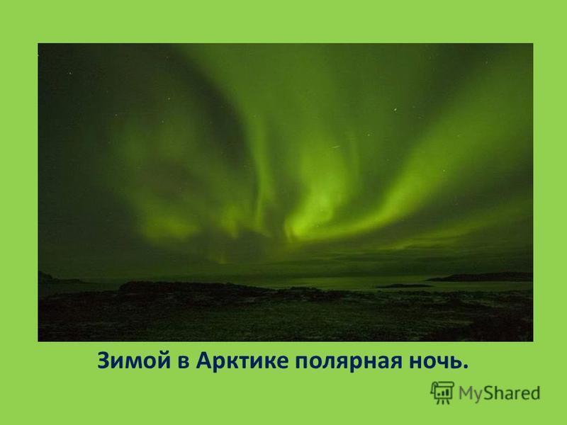Зимой в Арктике полярная ночь.