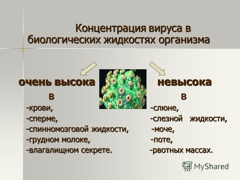 Концентрация вируса в биологических жидкостях организма Концентрация вируса в биологических жидкостях организма очень высока невысока в в в в -крови, -слюне, -крови, -слюне, -сперме, -слезной жидкости, -сперме, -слезной жидкости, -спинномозговой жидк
