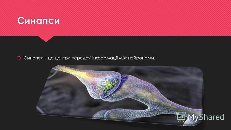 Синапси Синапси – це центри передачі інформації між нейронами.