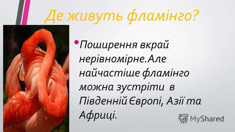 Де живуть фламінго? Поширення вкрай нерівномірне.Але найчастіше фламінго можна зустріти в Південній Європі, Азії та Африці.