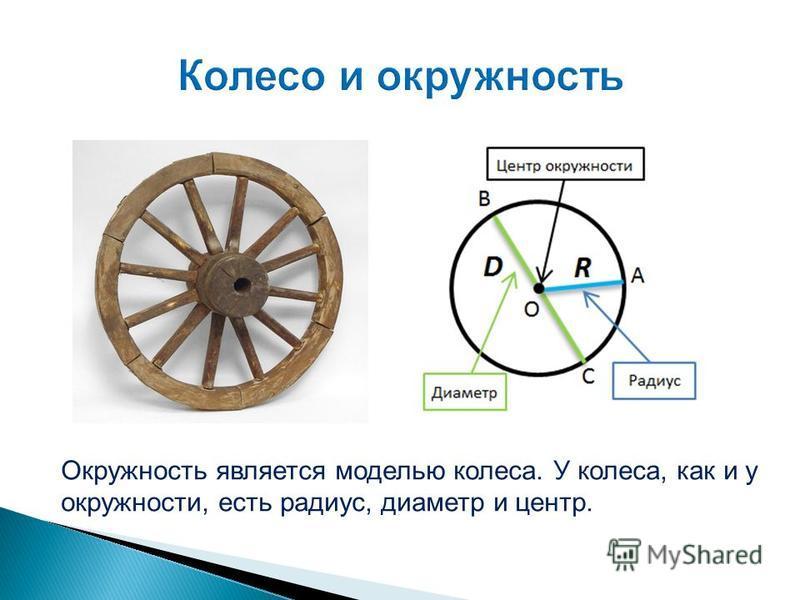 Окружность является моделью колеса. У колеса, как и у окружности, есть радиус, диаметр и центр.