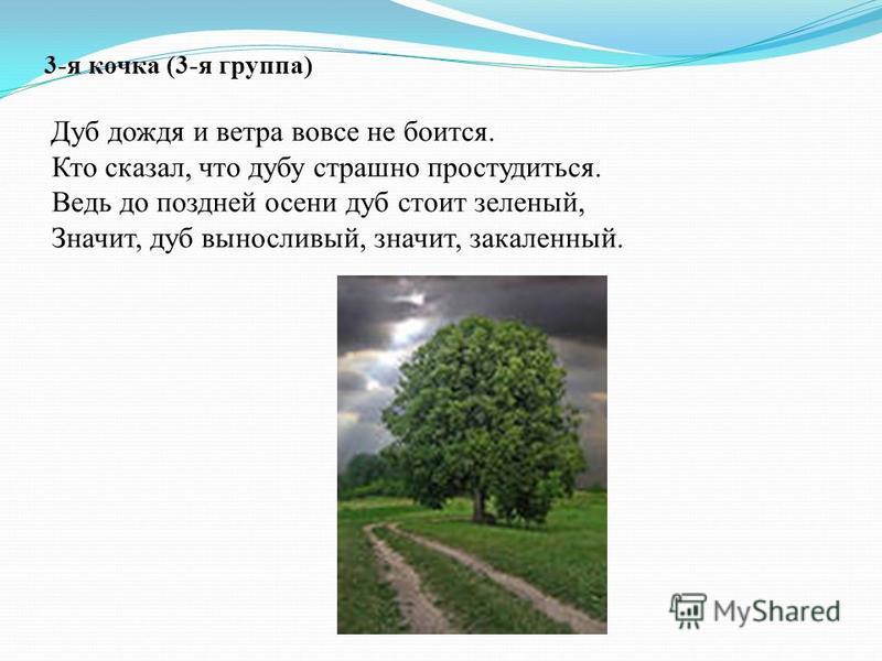 3-я кочка (3-я группа) Дуб дождя и ветра вовсе не боится. Кто сказал, что дубу страшно простудиться. Ведь до поздней осени дуб стоит зеленый, Значит, дуб выносливый, значит, закаленный.
