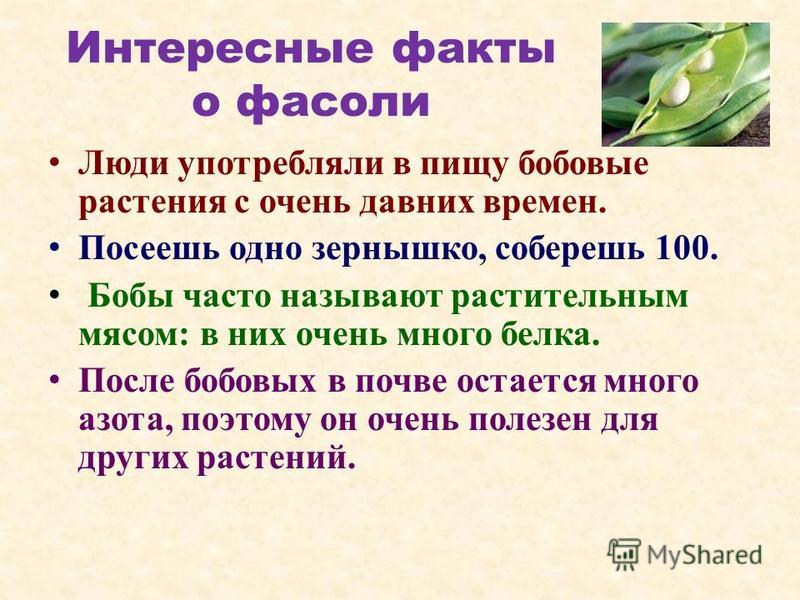 Интересные факты о фасоли Люди употребляли в пищу бобовые растения с очень давних времен. Посеешь одно зернышко, соберешь 100. Бобы часто называют растительным мясом: в них очень много белка. После бобовых в почве остается много азота, поэтому он оче