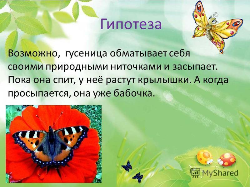 Возможно, гусеница обматывает себя своими природными ниточками и засыпает. Пока она спит, у неё растут крылышки. А когда просыпается, она уже бабочка. Гипотеза