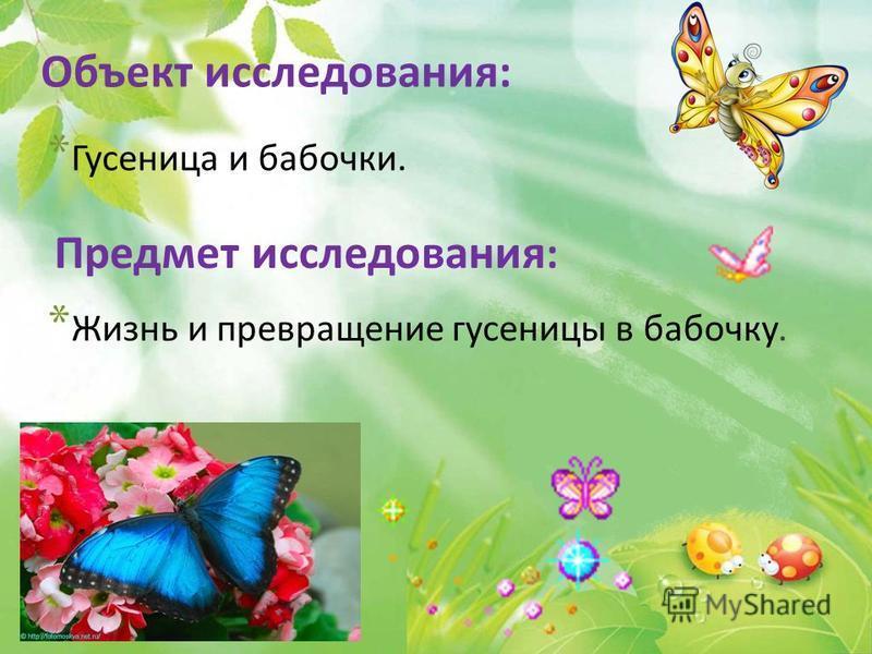 Объект исследования: * Жизнь и превращение гусеницы в бабочку. Предмет исследования : * Гусеница и бабочки.