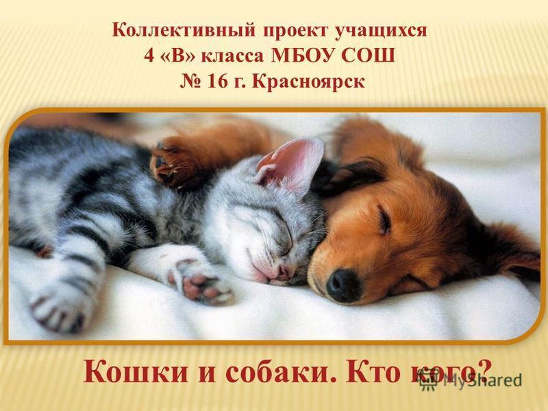 Коллективный проект учащихся 4 «В» класса МБОУ СОШ 16 г. Красноярск Кошки и собаки. Кто кого?