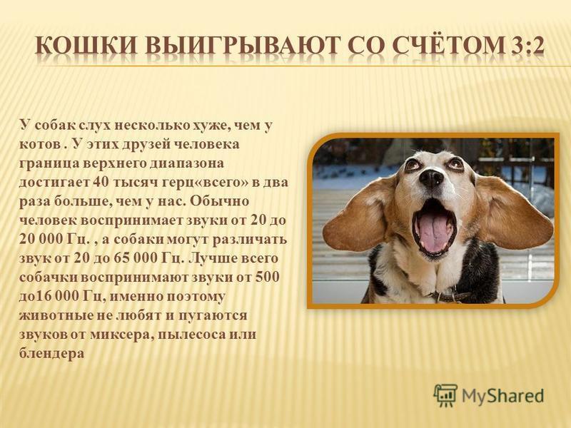 У собак слух несколько хуже, чем у котов. У этих друзей человека граница верхнего диапазона достигает 40 тысяч герц«всего» в два раза больше, чем у нас. Обычно человек воспринимает звуки от 20 до 20 000 Гц., а собаки могут различать звук от 20 до 65