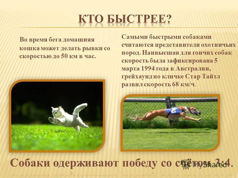 Во время бега домашняя кошка может делать рывки со скоростью до 50 км в час. Самыми быстрыми собаками считаются представители охотничьих пород. Наивысшая для гончих собак скорость была зафиксирована 5 марта 1994 года в Австралии, грейхаунд по кличке