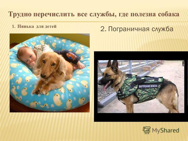 Трудно перечислить все службы, где полезна собака 1. Нянька для детей 2 2. Пограничная служба