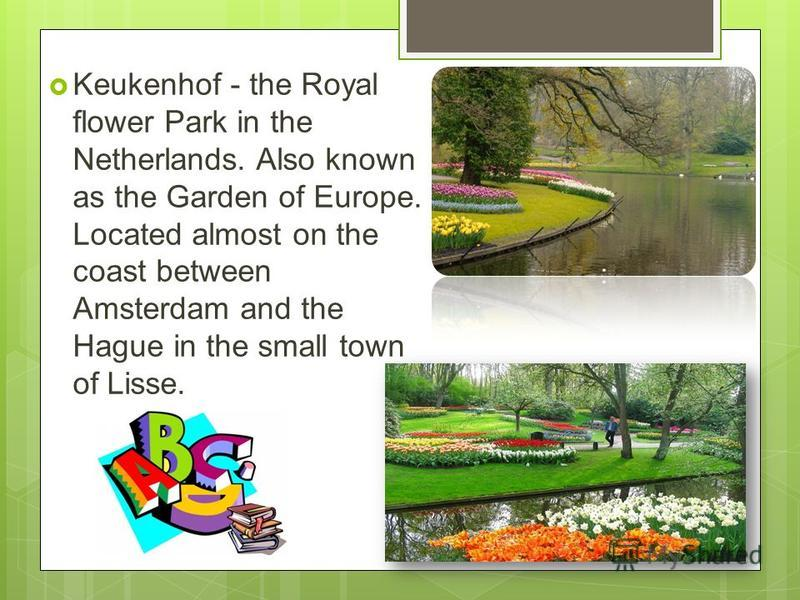 Keukenhof - the Royal flower Park in the Netherlands. Also known as the Garden of Europe. Located almost on the coast between Amsterdam and the Hague in the small town of Lisse.