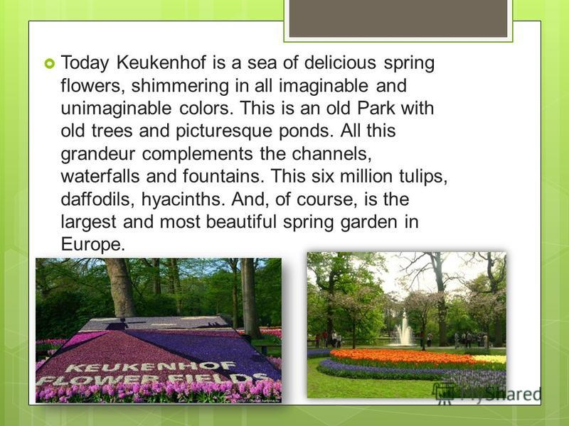Today Keukenhof is a sea of delicious spring flowers, shimmering in all imaginable and unimaginable colors. This is an old Park with old trees and picturesque ponds. All this grandeur complements the channels, waterfalls and fountains. This six milli
