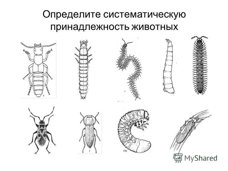 Определите систематическую принадлежность животных
