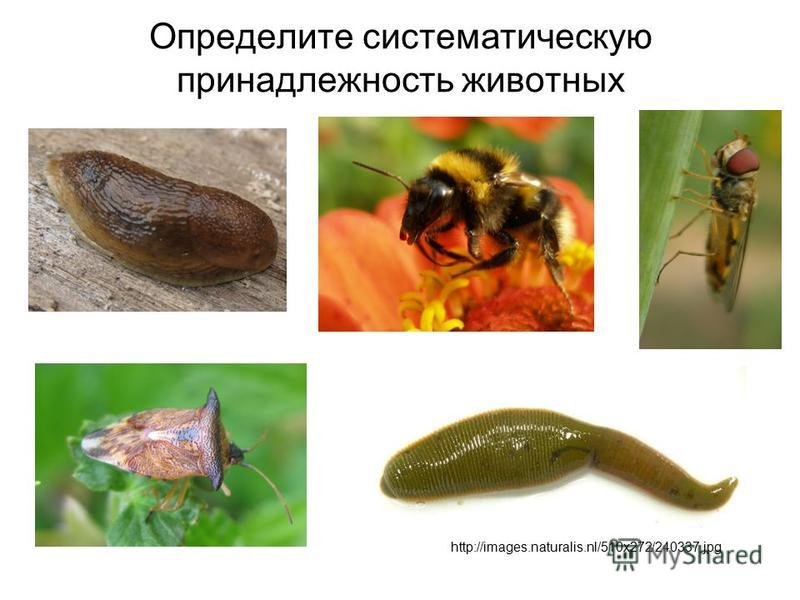 http://images.naturalis.nl/510x272/240337.jpg