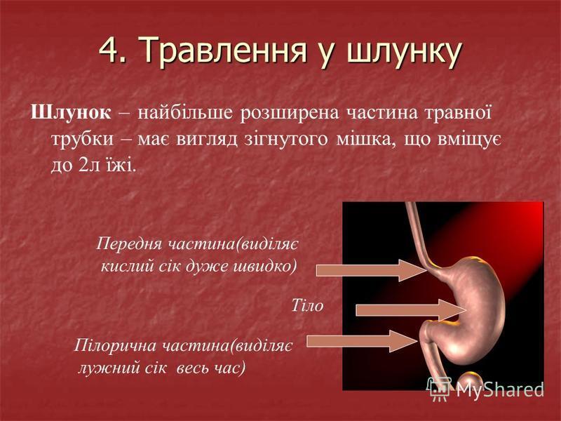 4. Травлення у шлунку Шлунок – найбільше розширена частина травної трубки – має вигляд зігнутого мішка, що вміщує до 2л їжі. Передня частина(виділяє кислий сік дуже швидко) Тіло Пілорична частина(виділяє лужний сік весь час)