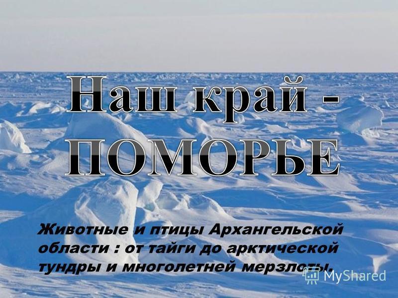 Животные и птицы Архангельской области : от тайги до арктической тундры и многолетней мерзлоты.