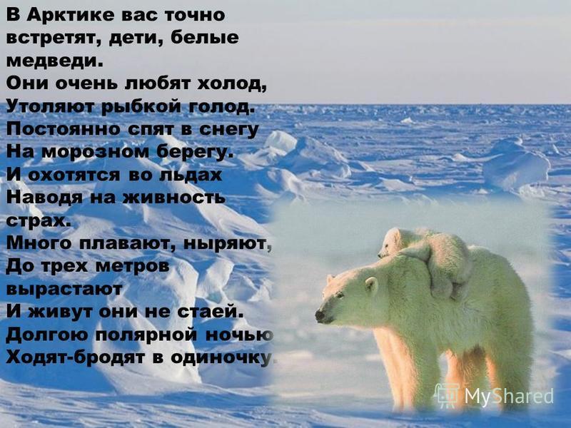В Арктике вас точно встретят, дети, белые медведи. Они очень любят холод, Утоляют рыбкой голод. Постоянно спят в снегу На морозном берегу. И охотятся во льдах Наводя на живность страх. Много плавают, ныряют, До трех метров вырастают И живут они не ст