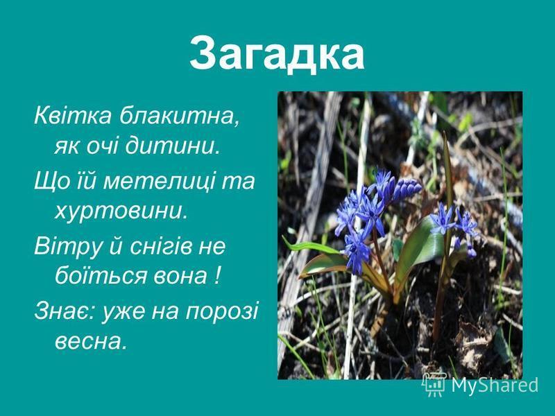 Загадка Квітка блакитна, як очі дитини. Що їй метелиці та хуртовини. Вітру й снігів не боїться вона ! Знає: уже на порозі весна.