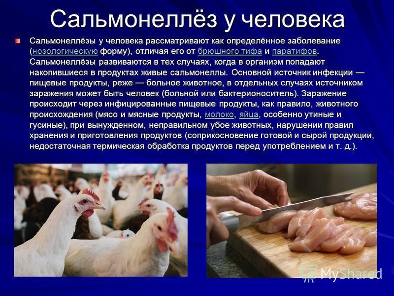 Сальмонеллёз у человека Сальмонеллёзы у человека рассматривают как определённое заболевание (нозологическую форму), отличая его от брюшного тифа и паратифов. Сальмонеллёзы развиваются в тех случаях, когда в организм попадают накопившиеся в продуктах