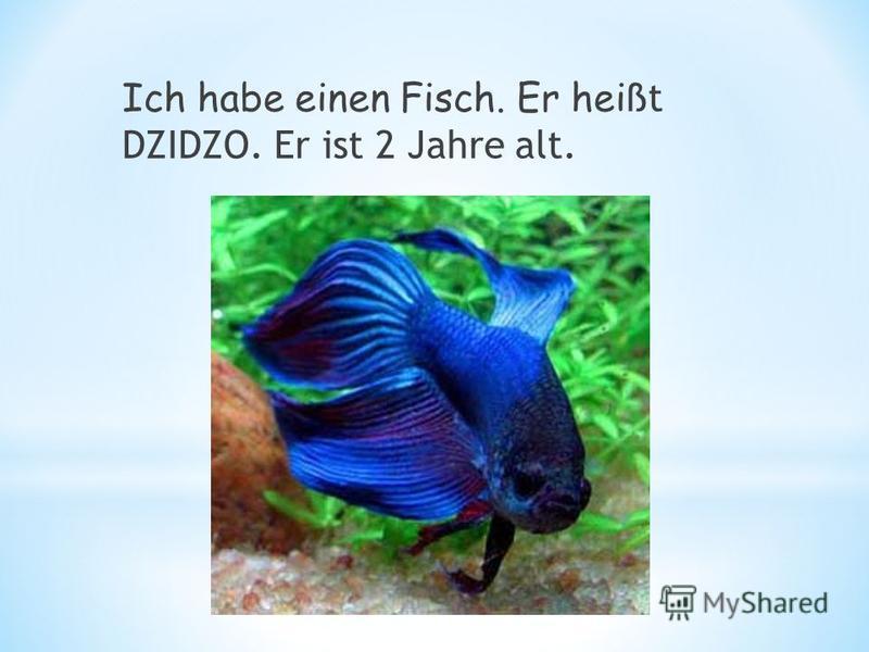 Ich habe einen Fisch. Er hei ßt DZIDZO. Er ist 2 Jahre alt.