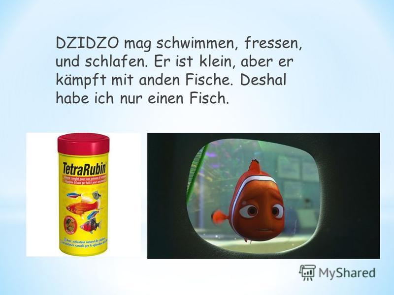 DZIDZO mag schwimmen, fressen, und schlafen. Er ist klein, aber er kämpft mit anden Fische. Deshal habe ich nur einen Fisch.