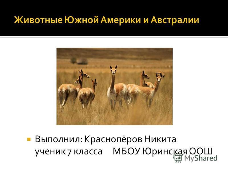 Выполнил: Краснопёров Никита ученик 7 класса МБОУ Юринская ООШ