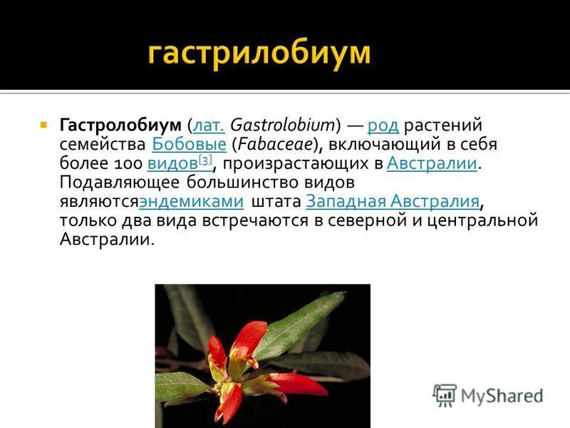 Гастролобиум (лат. Gastrolobium) род растений семейства Бобовые (Fabaceae), включающий в себя более 100 видов [3], произрастающих в Австралии. Подавляющее большинство видов являютсяэндемиками штата Западная Австралия, только два вида встречаются в се
