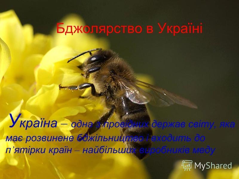 Бджолярство в Україні У країна – одна з провідних держав світу, яка має розвинене бджільництво і входить до п ятірки країн – найбільших виробників меду