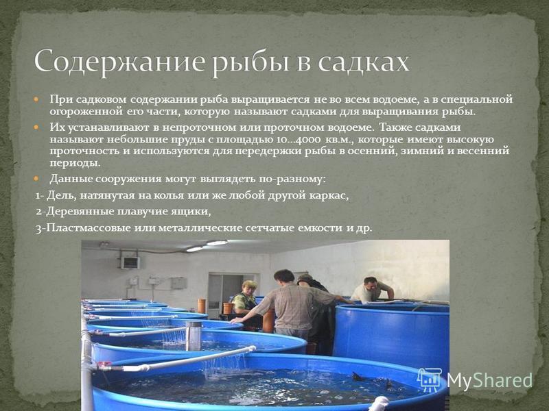 При садковом содержании рыба выращивается не во всем водоеме, а в специальной огороженной его части, которую называют садками для выращивания рыбы. Их устанавливают в непроточном или проточном водоеме. Также садками называют небольшие пруды с площадь